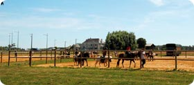 Cours poney
